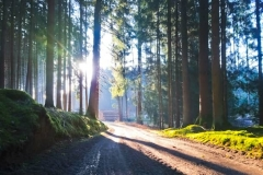 Sonnenstrahlen-im-Gablinger-Wald