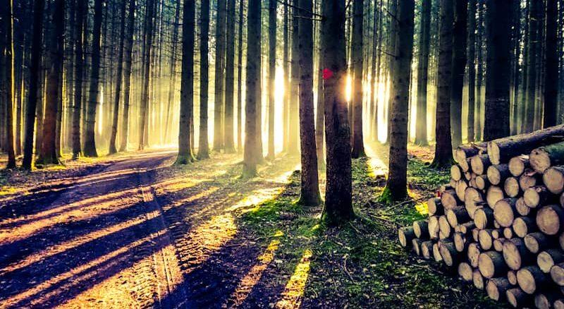 Morgenstimmung in den Westlichen Wäldern